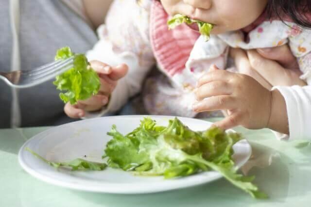 レタスを食べる子